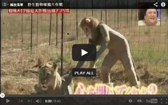 野生动物触碰大作战【狮子篇】